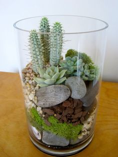 Succulent and cactus terrarium with river stones and moss