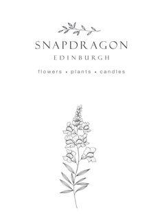 Logo design and illustration for Snapdragon Edinburgh