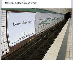 Natural selection at work