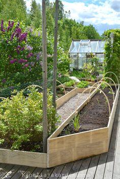 Kanelia ja kardemummaa: Valmista tuli! Fruit Garden, Herb Garden, Vegetable Garden, Home And Garden, Garden Landscape Design, Garden Landscaping, Gardening For Beginners, Gardening Tips, Garden Makeover