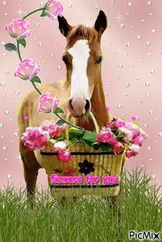 Dog Birthday Wishes, Funny Happy Birthday Messages, Happy Birthday Quotes For Friends, Happy Birthday Images, Birthday Greetings, Horse Happy Birthday Image, Horse Birthday, Animal Birthday, Beautiful Love Flowers
