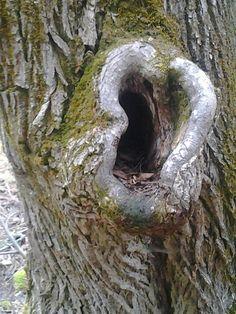 El árbol que todo lo oye