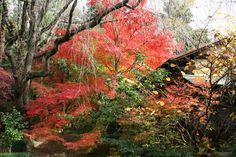妙心寺山内 退蔵院 Zen Garden Autumn