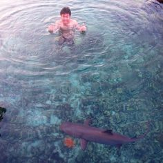 Shark shark shark rawrrrr #KarimunIsland #Indonesia