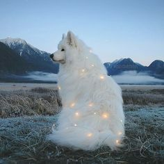 If These Samoyed Photos Don't Make You Smile, Nothing Will Animals And Pets, Baby Animals, Funny Animals, Cute Animals, Cute Puppies, Cute Dogs, Dogs And Puppies, Doggies, Awesome Dogs