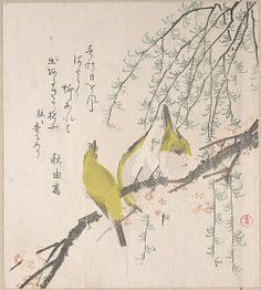 Branches of Plum Tree and Willow with Japanese White-Eyes  Kubo Shunman  (Japanese, 1757–1820)