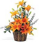 Lilies Arrangement for Hyderabad delivery.  Visit our site : www.flowersgiftshyderabad.com/Holi-Gifts-to-Hyderabad.php