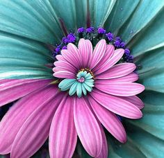 spiraling  pink and teal flower!