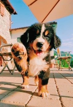 Super Cute Puppies, Cute Little Puppies, Cute Little Animals, Cute Dogs And Puppies, Cute Funny Animals, Baby Dogs, Doggies, Baby Puppies, Pet Dogs