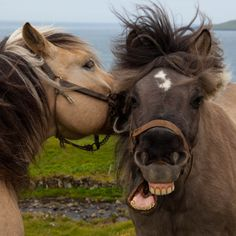 Horsey secrets