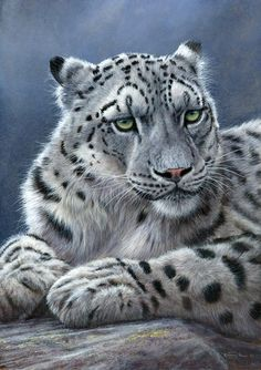 Jeremy Paul Wildlife Artist. Snow Leopard  The accurate portrayal of wildlife in its environment is the essence of the wildlife art of Jeremy Paul, an artist whose work is shown in leading galleries. His wildlife paintings are increasingly sought after and is now in collections of wildlife art in the UK, Middle East and North America where he has also exhibited on four times in the prestigious 'Birds in Art' at the Leigh Yawkey Woodson Art Museum.