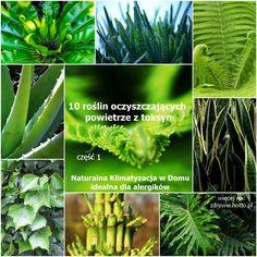 zdrowie.hotto.pl.pl-popularne-rośliny-domowe-oczyszczające…