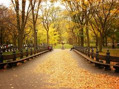 New York's Central Park in fall... That would be so pretty!