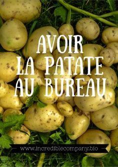 Avoir la patate au bureau /  Accompagnement de vos potagers ou vergers d'entreprise à Louvain-La-Neuve.