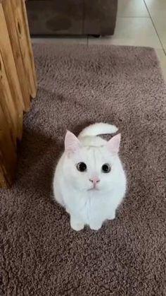 Cute Baby Cats, Cute Kittens, Cute Little Animals, Cute Funny Animals, Cats And Kittens, Cute Babies, Kitty Cats, Funny Animal Memes, Funny Cat Videos