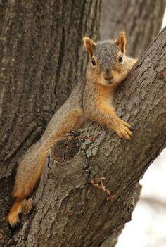 Squirrels! https://www.pinterest.com/joysavor/squirrels/