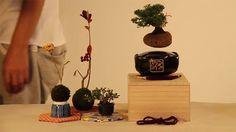 """""""Air Bonsai"""" - Floating Bonsai Trees"""