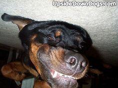 My upside down dog. :)    hehe, perfect