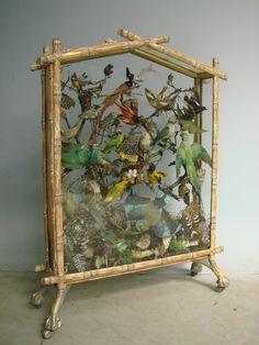 Victorian taxidermy Cabinet