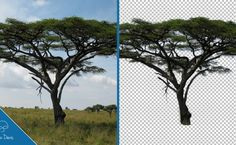 How to do tricky cutouts in photoshop using the color range command