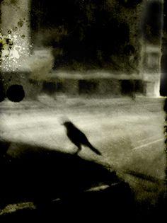 houston black crow jack barnosky