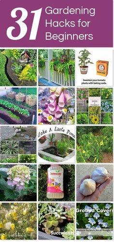 31 gardening hacks for beginners | Hometalk