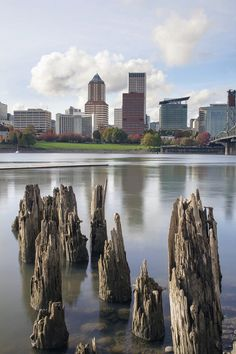 Portland Oregon Downtown City Skyline from the Waterfront of Willamette River Downtown Portland Oregon, Portland City, Oh The Places You'll Go, Places To Visit, State Of Oregon, Oregon Usa, Oregon Washington, Oregon Travel, Adventure Is Out There