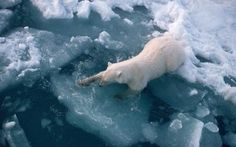 Global warming is making the oceans sicker than ever before, spreading disease among animals and humans and threatening food security across the planet, a major scientific report said on Monday.