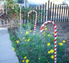 "These candy canes are made of standard 3/4"" PVC pipe. If you want, you can opt for the 1"" PVC or, with ore work, something even bigger.    In the picture are the PVC pipes cut to 5' lengths. Easily done by cutting the standard 10' length in half with a saw. Bring a saw to the hardware store and you can easily cut these down to size in the parking lot for easier transport."