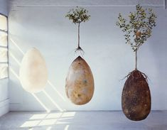 Capsula Mundi's organic burial pods that will turn your loved ones into trees