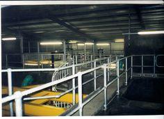 Flooring / Handrail / Steelwork