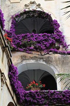 bluepueblo: Wisteria Balcony, Venice, Italy photo via menna Beautiful World, Beautiful Places, Foto Poster, Colorful Roses, Purple Flowers, All Things Purple, Purple Haze, Dark Purple, Balcony Garden