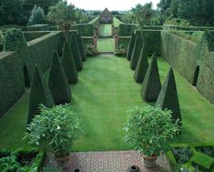 Kings Walk, East Ruston Old Vicarage - this is what I imagine the garden of Alice's Queen of Hearts to be like