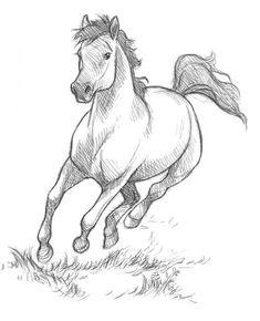 art dibujos Kelley McMorris illustration: Trying out digital pencils Horse Drawings, Cool Art Drawings, Pencil Art Drawings, Art Drawings Sketches, Horse Pencil Drawing, Easy Horse Drawing, Easy Animal Drawings, Drawing Animals, Art And Illustration