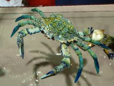 Glass crab by Beau Tsai.  See more of his work at http://beautsai.com.
