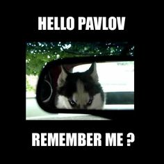 haha there is a lot of pins about pavlov's dog study but this is the only one that really made me laugh!