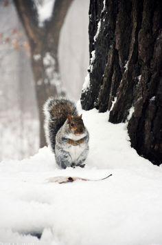Il neige à Montréal