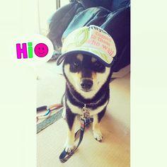 おはようわーん😃✨ ニオ地方に雨雲レーダー🌧反応してる っという事で、 朝パト👮行くよー❣  いーそーげーー🐕💨 今日は他県へお出かけ予定🚙✨ 皆様、楽しい週末をお過ごしください👋💕 #love#dog #dogs #instadog #dogstagram #petstagram #ilovemydog #doglover #shibainu #柴犬 #shiba #shibastagram #pet #happy #cute #instagram #like4like #愛犬 #instagood #黒柴 #followme #puppy #japan #puppylove #japanesedog #しばいぬ #チーム唐草 🌿No.143 #チーム大仏 🙏💓🙏No.17 #しばこ隊 🐶💕No.42