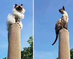 Here's how to make your OSTED NEDDA cat climber and let your cat claw its way up to the top. Hear me roar.