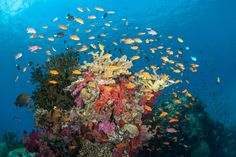 Diving with Paradise Taveuni