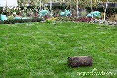 Ogród z lustrem - strona 83 - Forum ogrodnicze - Ogrodowisko