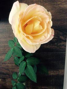 Minhas Rosas!!!