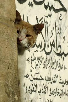 Photographer: Jonas Söderström. Cairo cat. 2007. #cats #caligraphy #Egypt #cairo #gingercats #budgettravel #travel #cats #kitten www.budgettravel.com