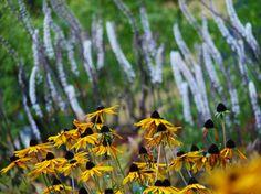 HUR SENT PÅ HÖSTEN KAN JAG PLANTERA?   shape IT green   Alla växter passar inte för höstplantering. Här reder jag ut vilka växter som kan planteras på hösten - och vilka du bör vänta med att sätta i jorden till våren.