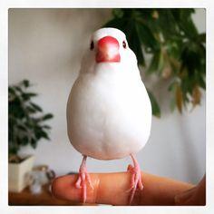 まじめ #buncho Bird Feathers, Birds, My Favorite Things, Pets, Twitter, Animals, Animales, Animaux, Bird