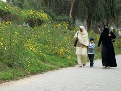 Less rains expected: Met Office predicts high pollen counts ahead - The Express Tribune