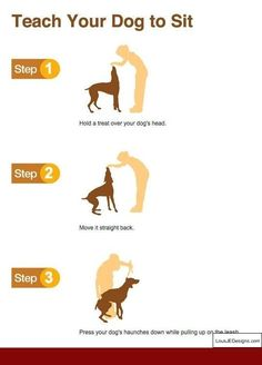 How To Train Your Dog For Backpacking and Pics of How To Leash Train A Dog Without Treats. Tip 8889060