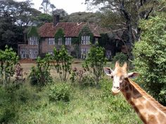 The Giraffe Manor boutique hotel is set on 12 acres of private land surrounded by 140 acres of indigenous forest in the Lagata suburbs of Nairobi, in Kenya.
