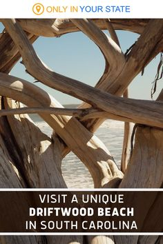 Visit this beautiful, remote beach in South Carolina. You'll find stunning scenery and an abundance of natural driftwood. Places To Travel, Travel Destinations, Places To Go, Best Bucket List, Botany Bay, Driftwood Beach, Hidden Beach, Swimming Holes, Rv Camping