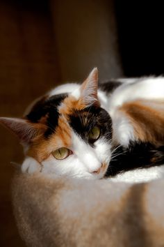 Wonderful calico cat and she reminds me of my Annie